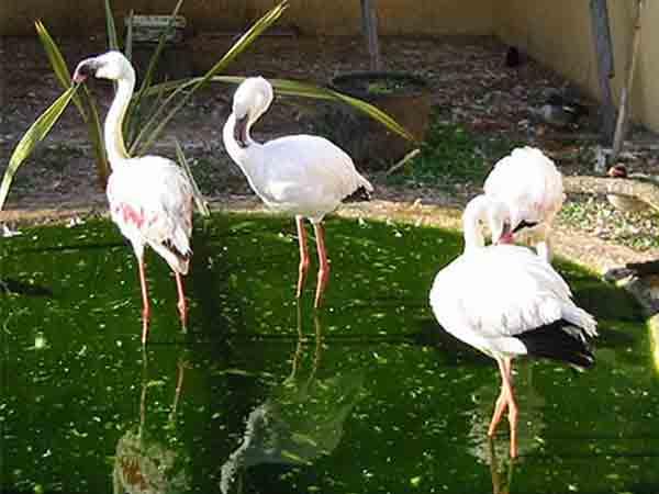 Museo-naturalistico-Parco-degli-Uccelli-Scano-di-Montiferro